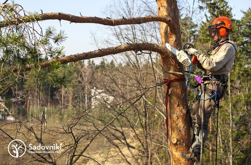 Удаление деревьев и пней Sadovniki.kz