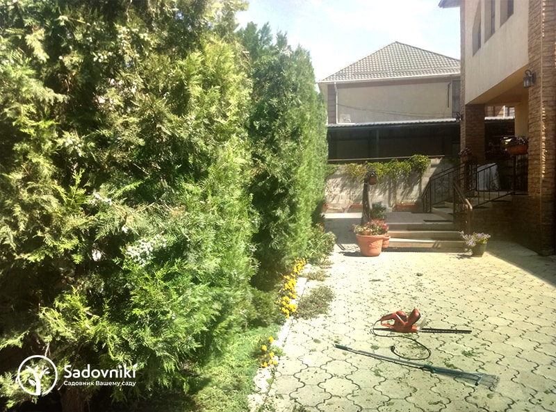 Стрижка и обрезка растений Sadovniki.kz